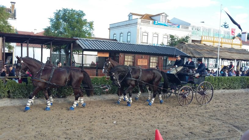 paardenmarkt Golega