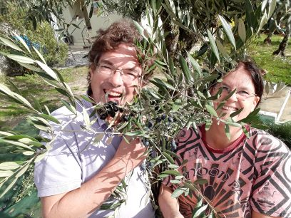 Olivepicking at Porturama